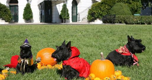 LB.  Halloween Portraits of the Pets.