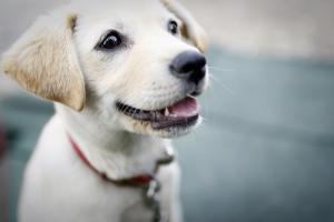 dog-425067_960_720