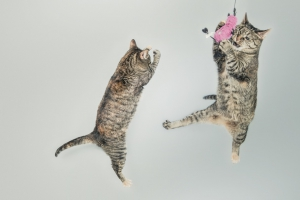 jumping-cute-playing-animals-large