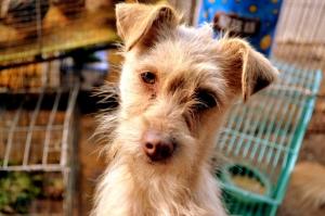 cute-dog-1393217063c11