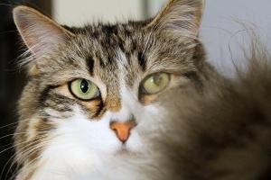 annoyed-cat-1