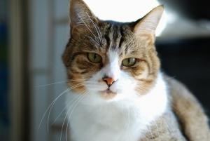 cat-1091521_960_720