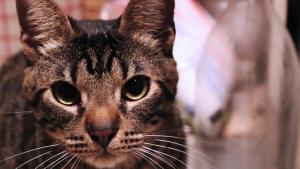 Animal Pet Kitten Whiskers Cat Domestic Cute