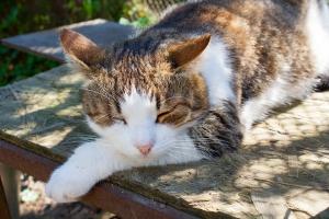 cat-1625984_960_720