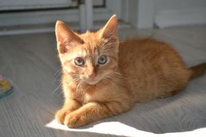 cat-1216143_960_720